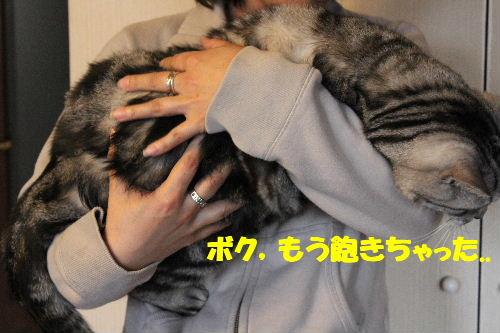 2011年4月抱っこ4.JPG