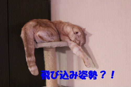 2011年4月新倒れ3.JPG