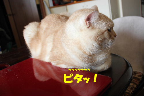 2011年4月狙い4.JPG