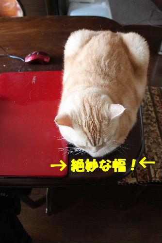 2011年4月狙い5.JPG
