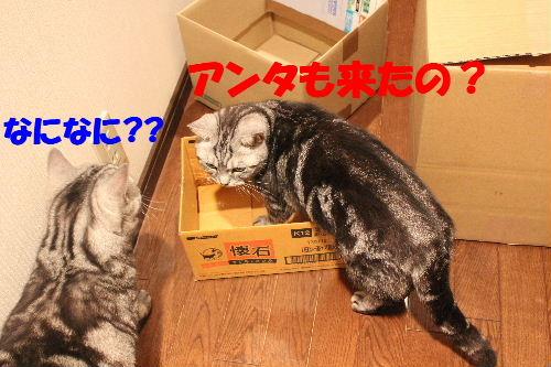 2011年4月箱ノエ1.JPG