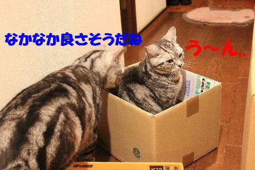 2011年4月箱ノエ2.JPG