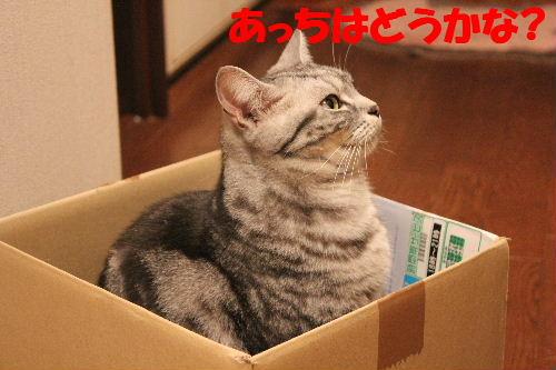 2011年4月箱ノエ4.JPG