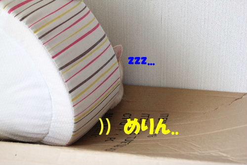 2011年5月ころ3.JPG