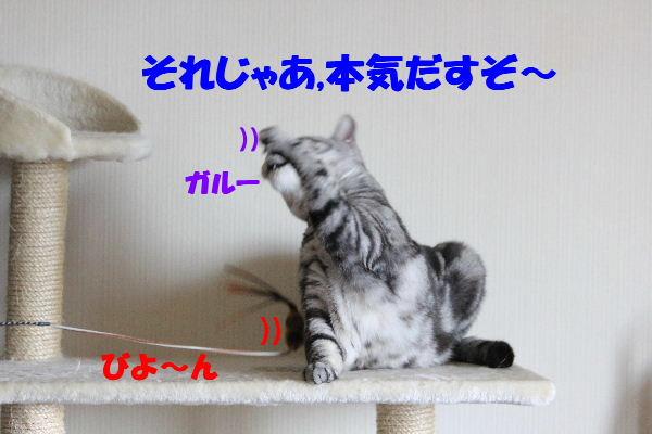 2011年5月ガッツ5.JPG
