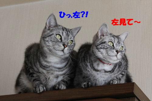 2011年5月シンクロ2.JPG
