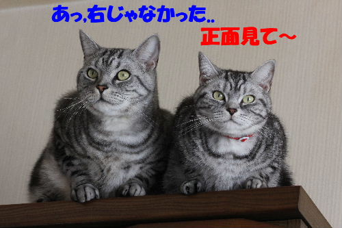 2011年5月シンクロ3.JPG