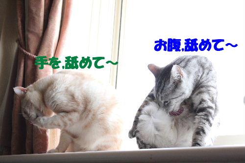 2011年5月シンクロ6.JPG