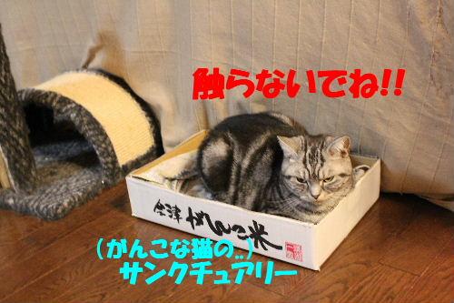 2011年5月逃げ0.JPG