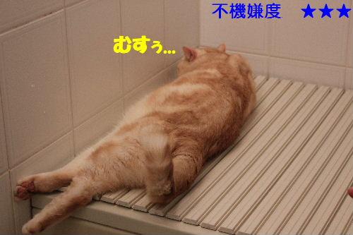 2011年5月風呂1.JPG