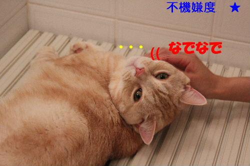 2011年5月風呂2.JPG