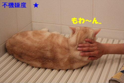 2011年5月風呂4.JPG