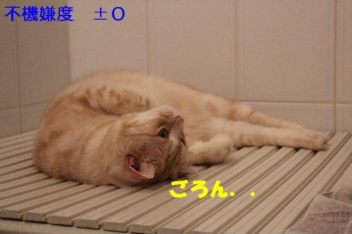 2011年5月風呂6.JPG