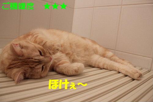 2011年5月風呂9.JPG