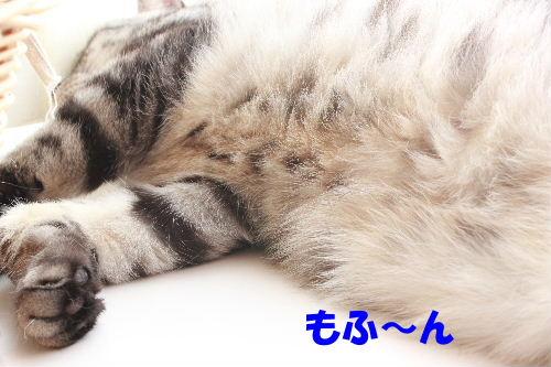 2011年6月たま0-2.JPG