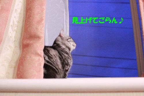 2011年6月トワイライト4.JPG