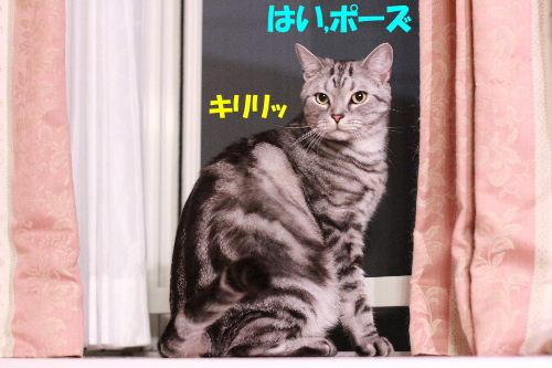 2011年6月トワイライト8.JPG
