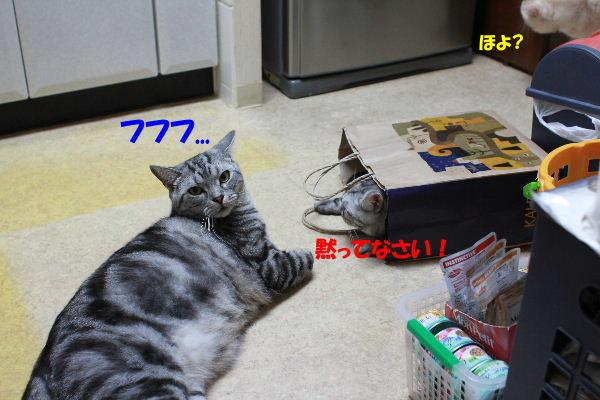2011年6月ノビ6.JPG