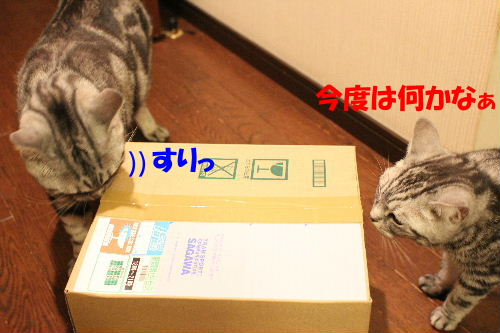 2011年6月ビ0.JPG