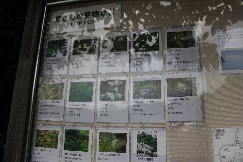 2011年6月園5-1.JPG