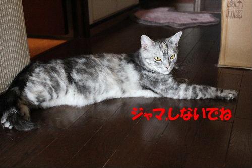 2011年6月暑3.JPG