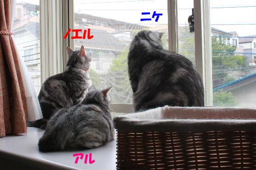 2011年6月曇り0.JPG