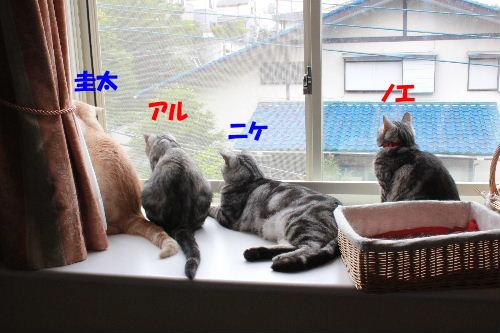 2011年6月曇り3.JPG