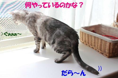 2011年6月草1.JPG