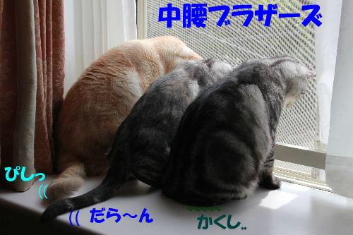 2011年6月草2.JPG