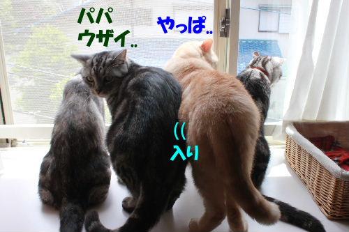 2011年6月草8.JPG