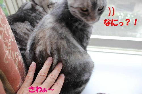 2011年6月触り1-4.JPG
