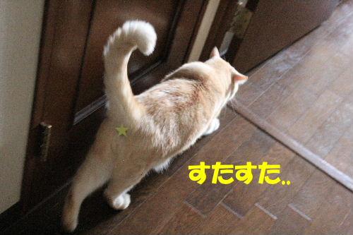2011年7月いまこれ5.JPG