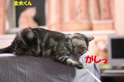 2011年7月ひも7.JPG