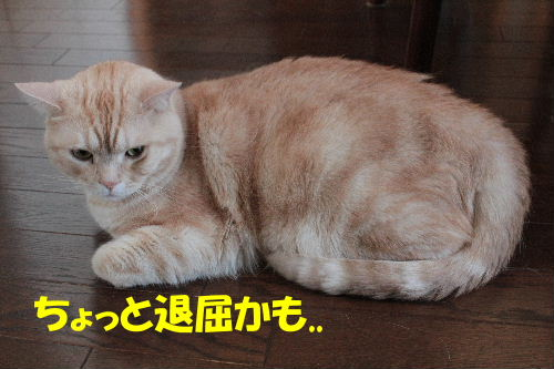 2011年7月ジョウ0.JPG