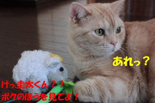 2011年7月ジョウ2.JPG