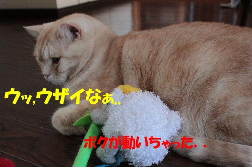 2011年7月ジョウ3.JPG