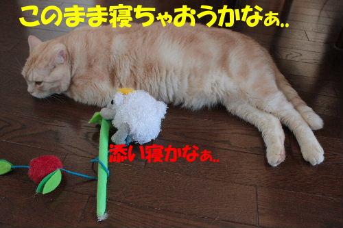 2011年7月ジョウ4.JPG
