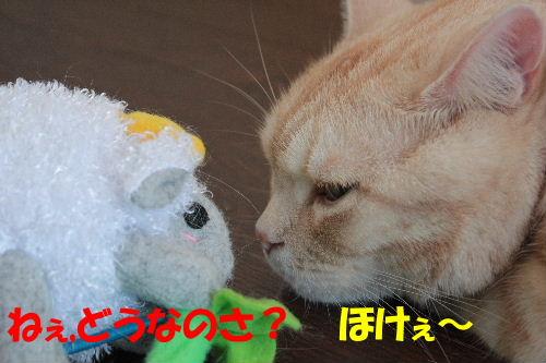 2011年7月ジョウ7.JPG
