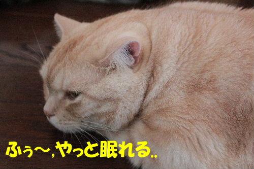 2011年7月ジョウ9.JPG