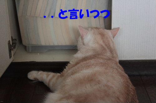 2011年7月戸棚2.JPG