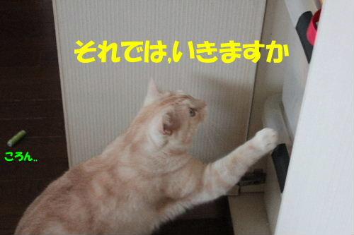 2011年7月戸棚7.JPG