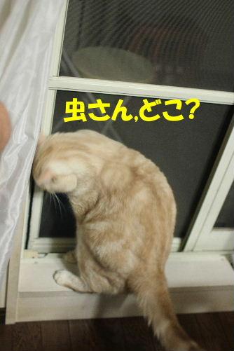 2011年7月窓2.JPG