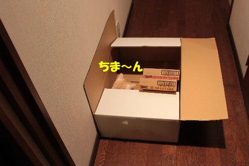 2011年7月箱0.JPG