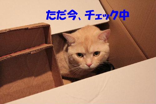 2011年7月箱1.JPG