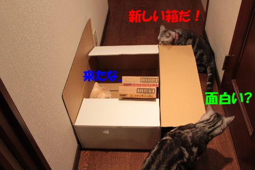 2011年7月箱2.JPG