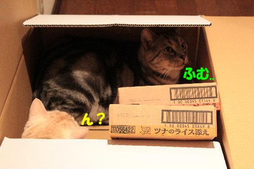 2011年7月箱5.JPG