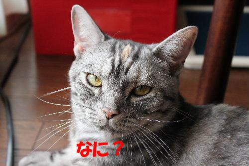2011年7月誕2-3.JPG