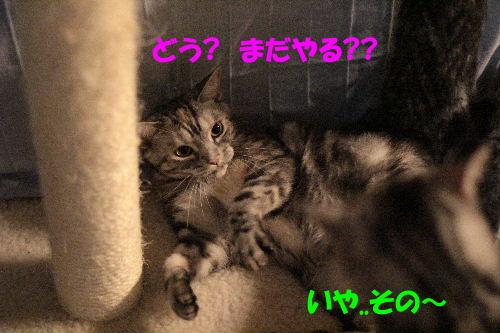 2011年7月過激6.JPG