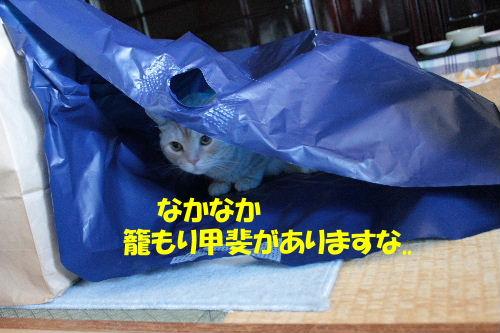 2011年7月雑貨4.JPG