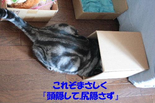 2011年7月雑貨4-2.JPG
